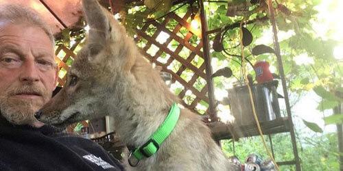 у хозяина отобрали койота