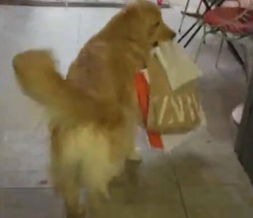 собака таскает сумки из машины