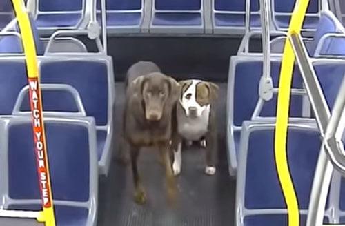 потерявшиеся собаки в автобусе