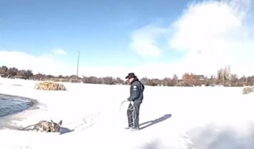 спасение жизни оленя