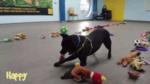 собаки выбирают подарки