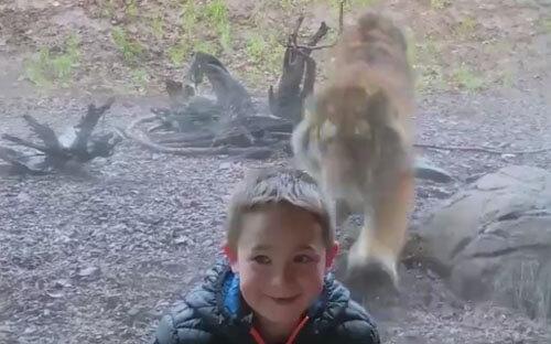 мальчик и тигр в зоопарке