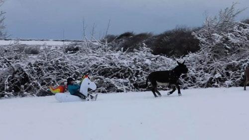 ослы катают хозяйку на единороге