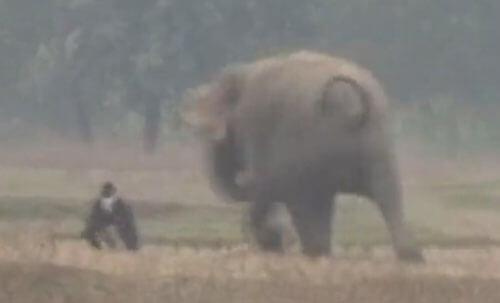 слон не захотел фотографироваться