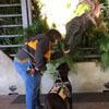 пёс встретился с динозавром