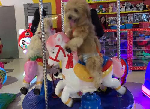 собаки катаются на карусели