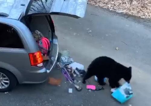 медведи обокрали автомобиль