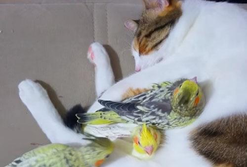 птички в объятиях кошки