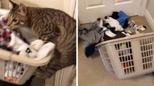 игры с неуклюжим котом