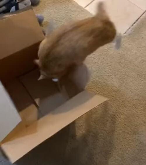 природные инстинкты кота