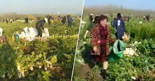 фермеры лишились урожая