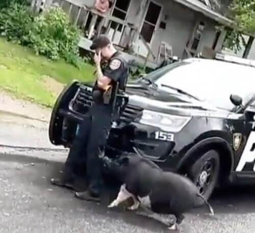 непочтительное отношение к полиции