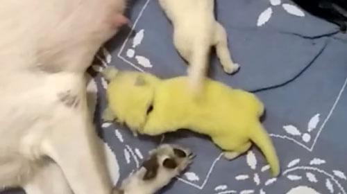 собака родила зелёного щенка