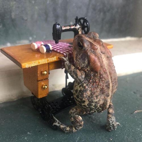 жаба в кукольном домике