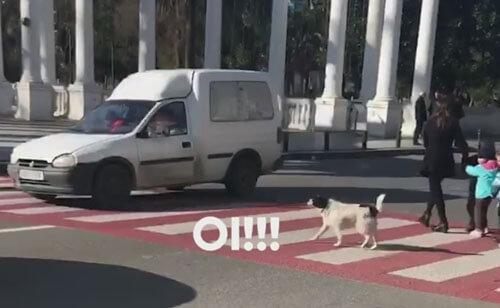 собака помогает детсадовцам