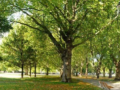 деревья в парке ломаются