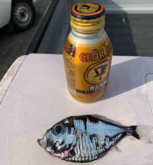 рыба выглядит нарисованной