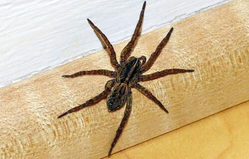 грубая поговорка про пауков