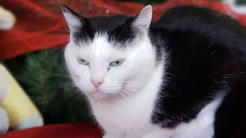 худшая кошка в мире