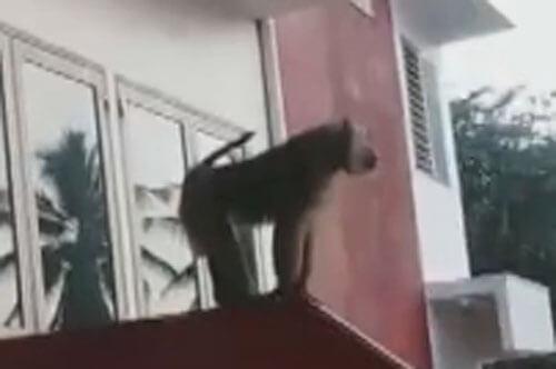 обезьяна в полицейском участке