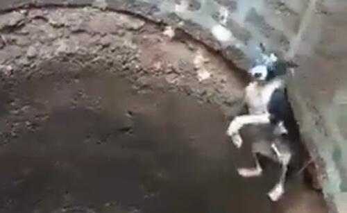 собаку вытащили из колодца