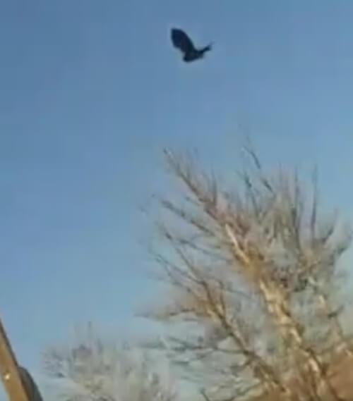 ворона застыла без движения