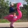 папа верхом на розовом фламинго