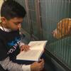 мальчик читает собакам книжки
