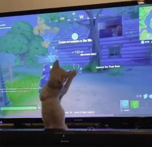 котёнок перед экраном телевизора