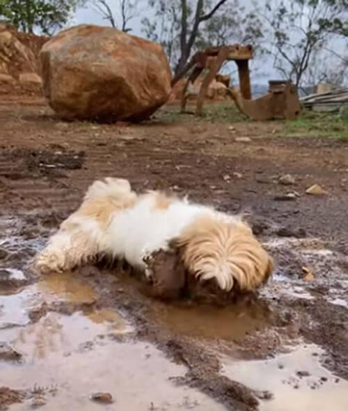 собака принимает грязевую ванну