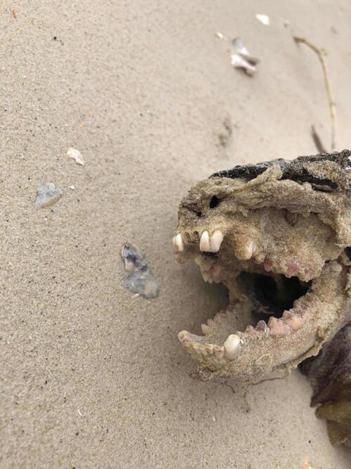 загадочное существо на пляже