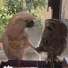 попугай влюбился в сову