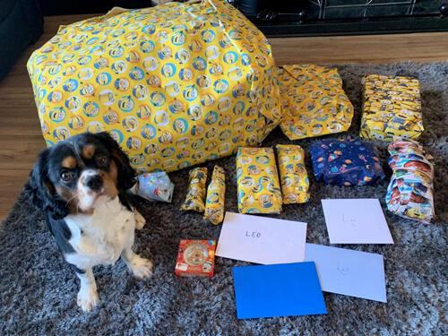 первый день рождения пса
