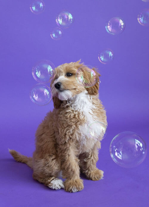 мыльные пузыри для собак