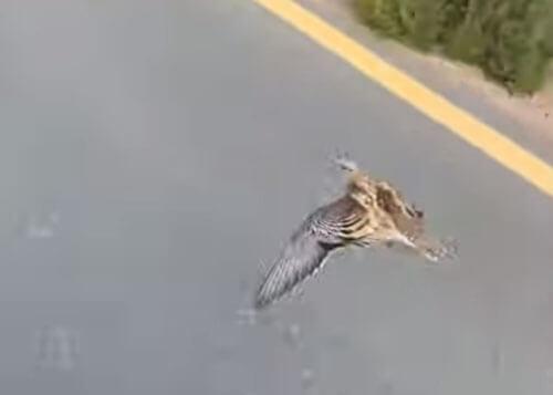 птица интересуется велоспортом