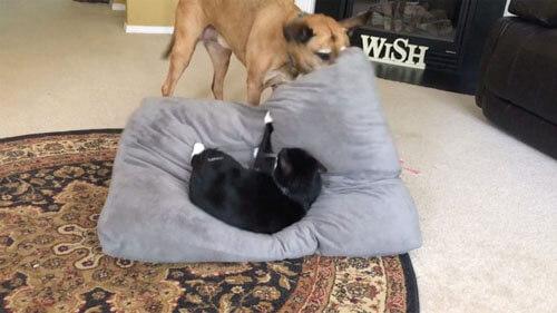 любимая лежанка занята котом
