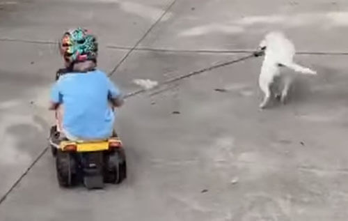 игривый щенок уронил мальчика