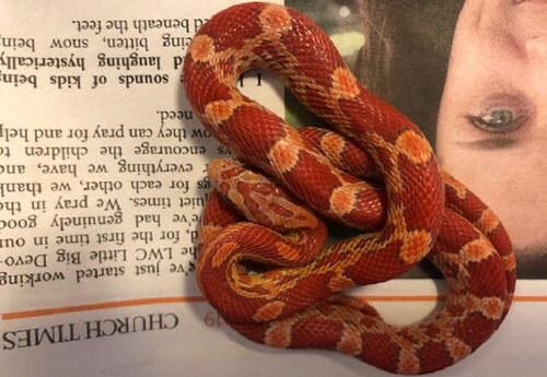змея спряталась в шкафу