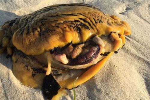 моллюск опасный для собак