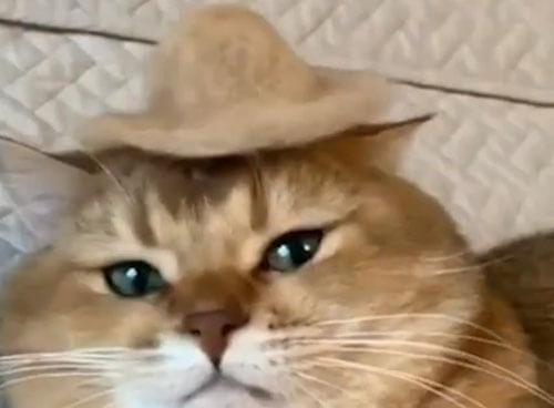модная шляпа для кота