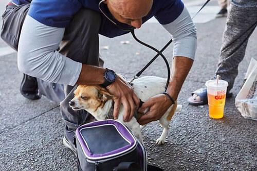 добрый уличный ветеринар