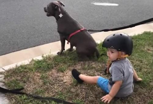 мальчик сидит с собаками
