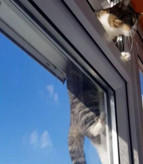 кошке не нужны никакие двери