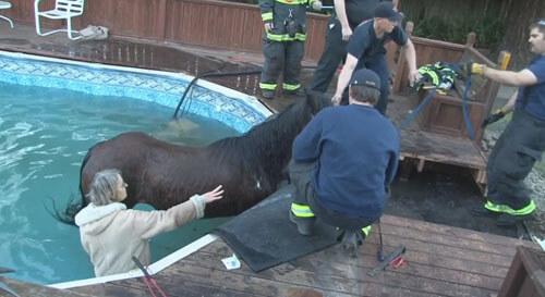 лошадь провалилась в бассейн