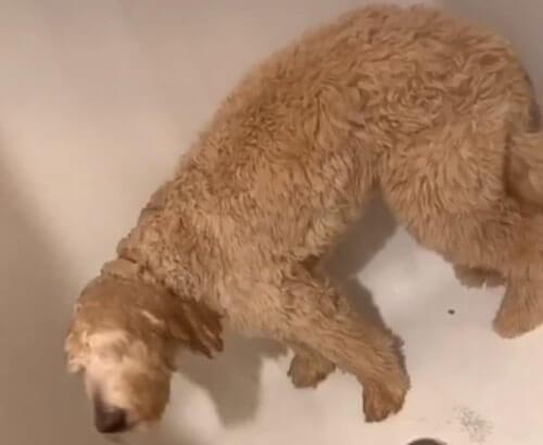 пёс любит принимать душ