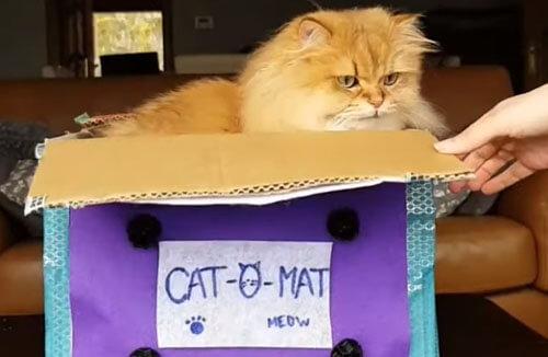 автомат для производства кошек