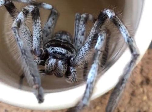 паук расположился в чашке