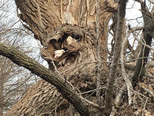 пёс не смог слезть с дерева