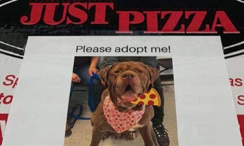 портреты собак на коробках пиццы