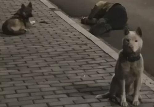 собаки и пьяный хозяин